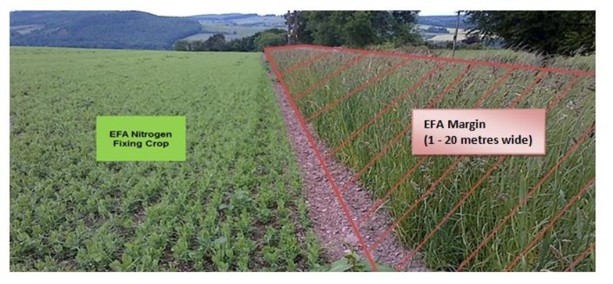 EFA nitrogen-fixing crops with associated claimed EFA field margins