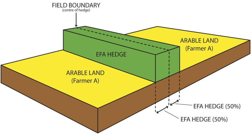 EFA hedge example four B