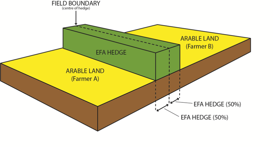 EFA hedge diagram example 4