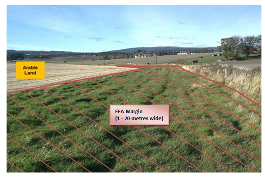 Image showing an example of a field margin